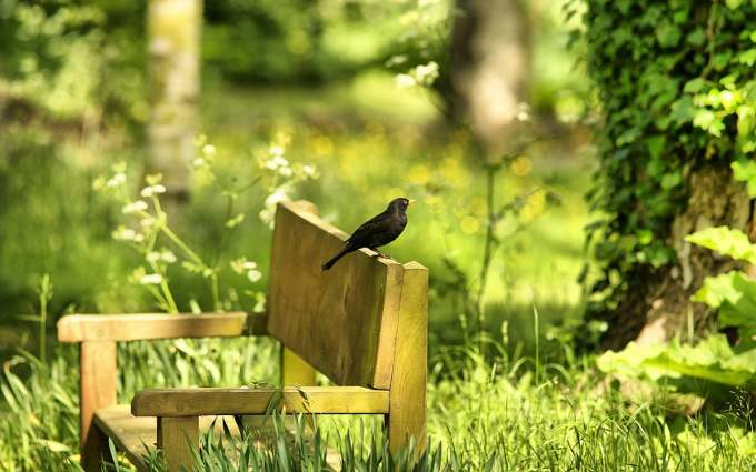 bird-in-garden