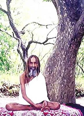janglidas-drzewko